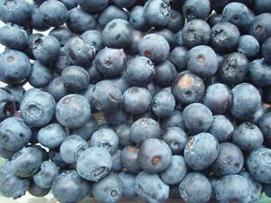 Zdrava hrana za trudnice – 15 sjajnih namirnica borovnice