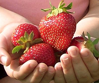 Zdrava hrana za trudnice - 15 sjajnih namirnica